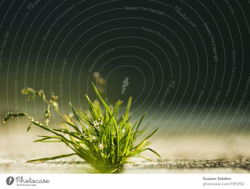 Happy Birthday, PHOTOCASE Sonne grün Pflanze Sommer Gras Holz See Wärme hell Küste Erde Sträucher Blühend leuchten Steg Moos