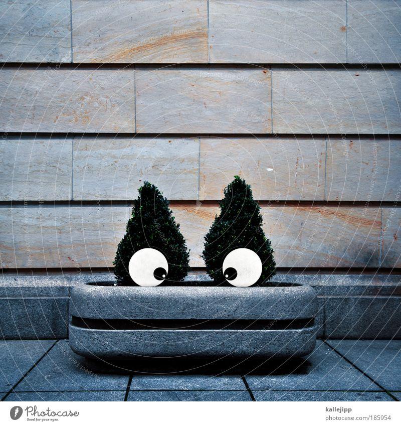 happy birthday, photocase Mensch Freude Gesicht Auge Garten Glück Park Mund grinsen Comic Schielen Blumentopf Affen Humor Blick Maul