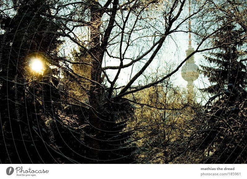 HAPPY BIRTHDAY, PHOTOCASE! Himmel Natur schön Baum Pflanze Sonne Winter Wald Erholung kalt Schnee Umwelt Berlin Landschaft Architektur Park