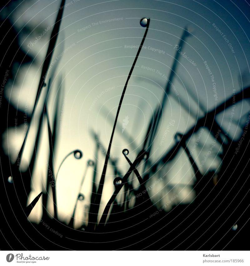 happy birthday. photocase. Himmel Natur Pflanze schön Wasser Winter Umwelt Leben Herbst Frühling Wiese Gras Lifestyle Freiheit Linie Design