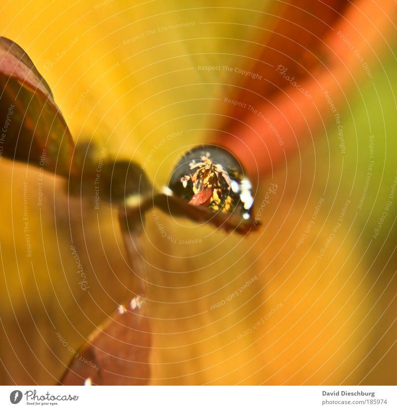 Happy Birthday, Photocase ! Umwelt Natur Pflanze Wassertropfen Herbst Blatt gelb gold silber feucht nass herbstlich orange rund Tropfen Farbfoto Außenaufnahme