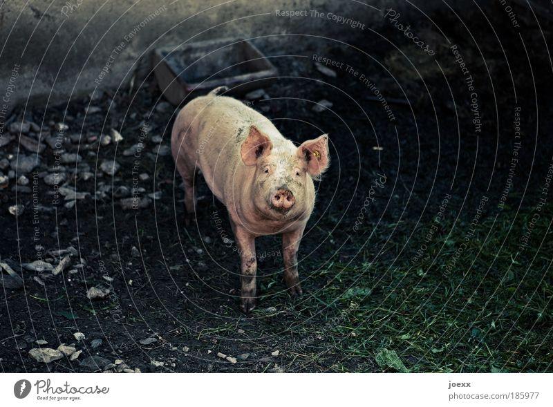 HAPPY BIRTHDAY PHOTOCASE Einsamkeit Tier Glück rosa Armut Erfolg Freundlichkeit Symbole & Metaphern Blick Wunsch füttern Glückwünsche gebrauchen Nutztier Gruß