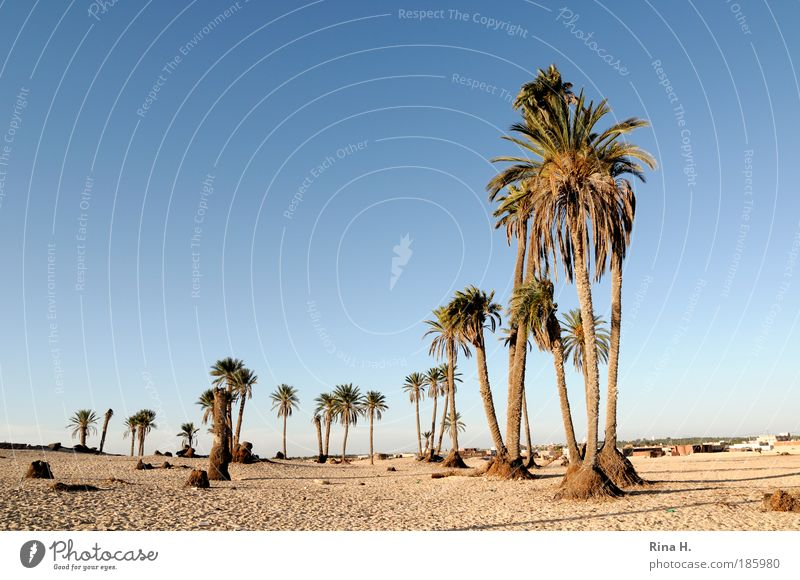 Nichts als Palmen Natur blau Ferien & Urlaub & Reisen Einsamkeit Ferne Landschaft Sand Wärme Stimmung Erde hoch Tourismus Afrika authentisch Wüste trocken