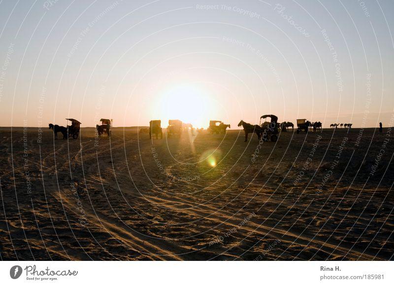 Warten Natur Sommer Ferien & Urlaub & Reisen Ferne Gefühle warten Erde Ausflug Pferd Abenteuer Tiergruppe authentisch Wüste Mobilität Schönes Wetter exotisch