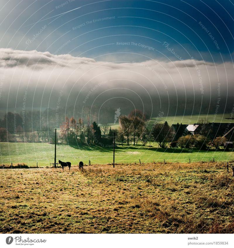 Früh-Stück Umwelt Natur Landschaft Pflanze Tier Himmel Wolken Horizont Klima Schönes Wetter Baum Gras Wiese Weide Lausitz Sachsen Deutschland Dorf Haus Dach
