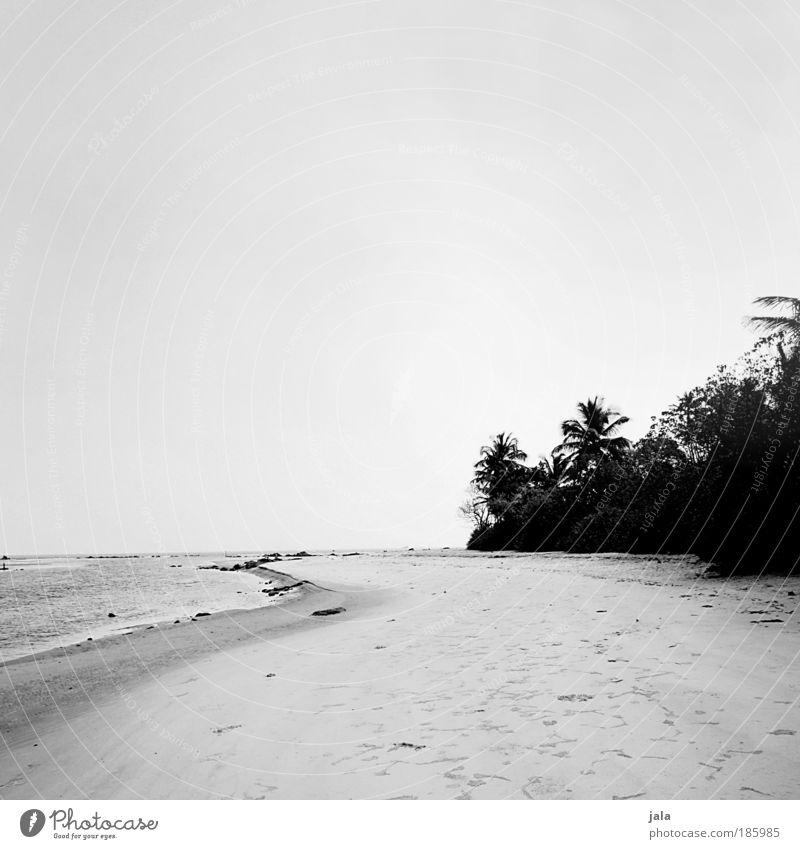 Happy Birthday Photocase! Natur Wasser Baum Meer Pflanze Strand Ferien & Urlaub & Reisen Sand Landschaft genießen Indien Wolkenloser Himmel