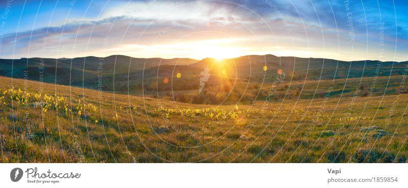 Panoramafeld mit Blumen und drastischem Himmel Natur Ferien & Urlaub & Reisen Himmel (Jenseits) Pflanze blau Farbe Sommer grün weiß Sonne Landschaft rot Wolken