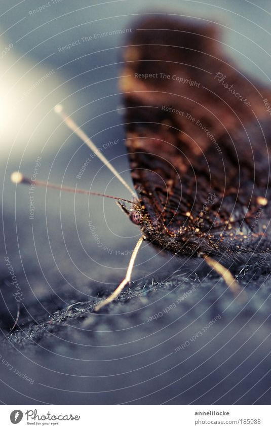 Happy Birthday, Photocase! Natur Sommer Tier dunkel Herbst Wiese grau träumen Traurigkeit Park Feld Umwelt sitzen Trauer ästhetisch Flügel