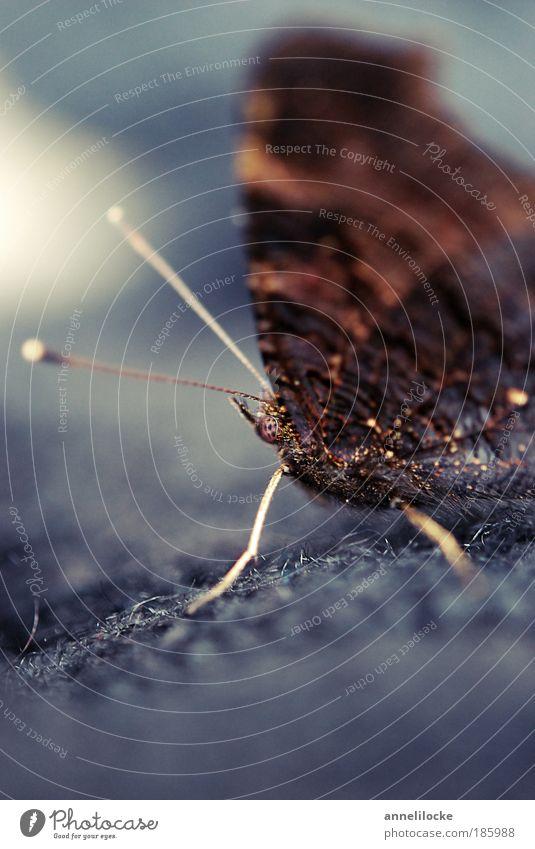 Happy Birthday, Photocase! Umwelt Natur Tier Sommer Herbst Schönes Wetter Park Wiese Feld Wildtier Schmetterling Flügel Schuppen Fühler Facettenauge