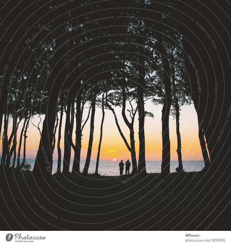 zu zweit weniger allein Umwelt Natur Landschaft Wolkenloser Himmel Sonne Sonnenaufgang Sonnenuntergang Sommer Schönes Wetter Baum Wald beobachten Freundlichkeit