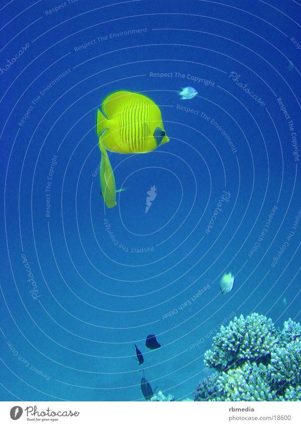 bessere Welt tauchen Meer Korallen Meerwasser Wasser blau Fisch