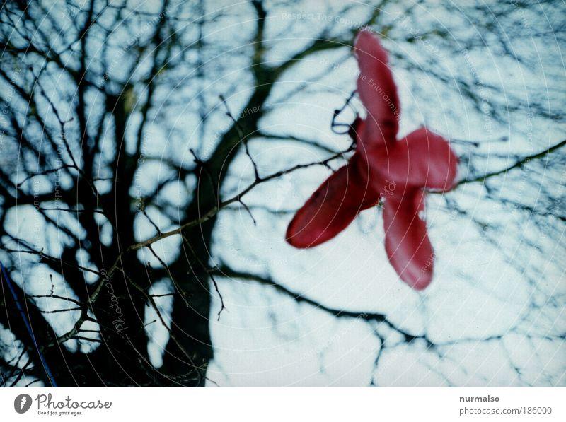 untrüblich schön, ein Guter Morgen Himmel Natur Baum rot Winter Umwelt grau Stil Kunst Park rosa fliegen Klima authentisch Fröhlichkeit leuchten