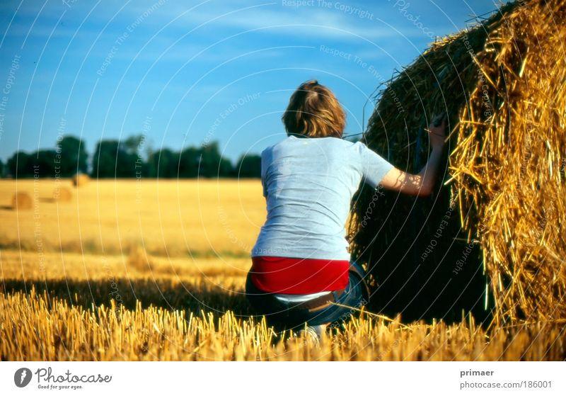 Gelb Erholung Sommer Mensch Frau Erwachsene Natur Himmel Schönes Wetter Feld beobachten genießen hocken ästhetisch natürlich blau gelb Zufriedenheit Optimismus