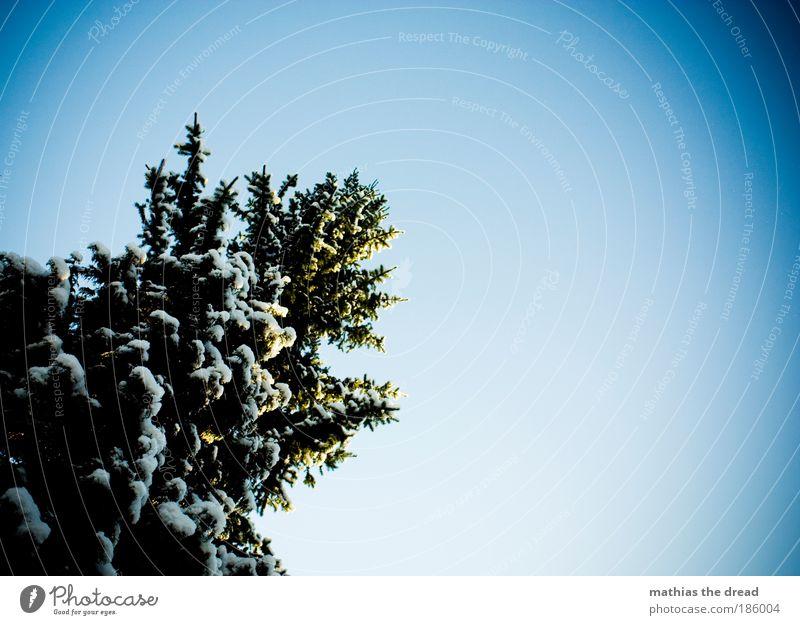 OH TANNENBAUM Natur blau weiß schön Baum Pflanze Winter Umwelt kalt Berge u. Gebirge Schnee Holz hoch Idylle Schönes Wetter Ast