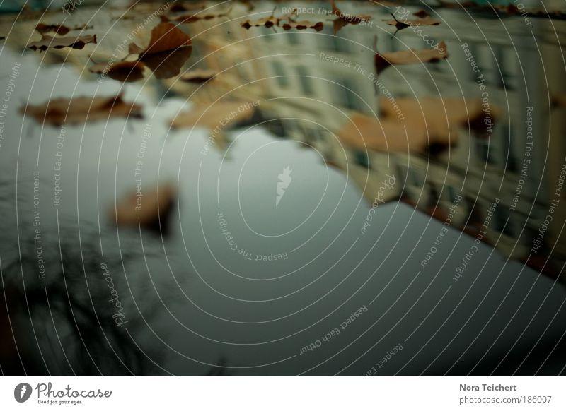 Autodach statt Pfütze Umwelt Natur Landschaft Pflanze Herbst Baum Blatt Haus Verkehr Autofahren Straße Fahrzeug PKW atmen entdecken träumen verblüht dehydrieren