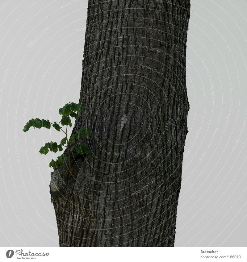 Alt wie ein Baum möchte ich werden Natur Pflanze Baumstamm Weisheit Wegweiser Politik & Staat Vorsicht Baumrinde Jungpflanze Schilder & Markierungen eigenwillig