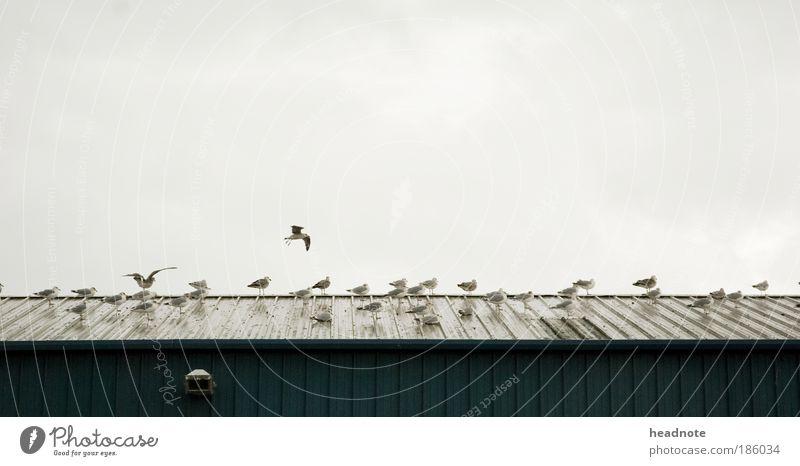 Mövenfolk ruhig Ferien & Urlaub & Reisen Ausflug Meer Umwelt Natur Landschaft Wasser Wolken Klima Wetter Unwetter Wind Küste Tier Vogel möven Tiergruppe Schwarm