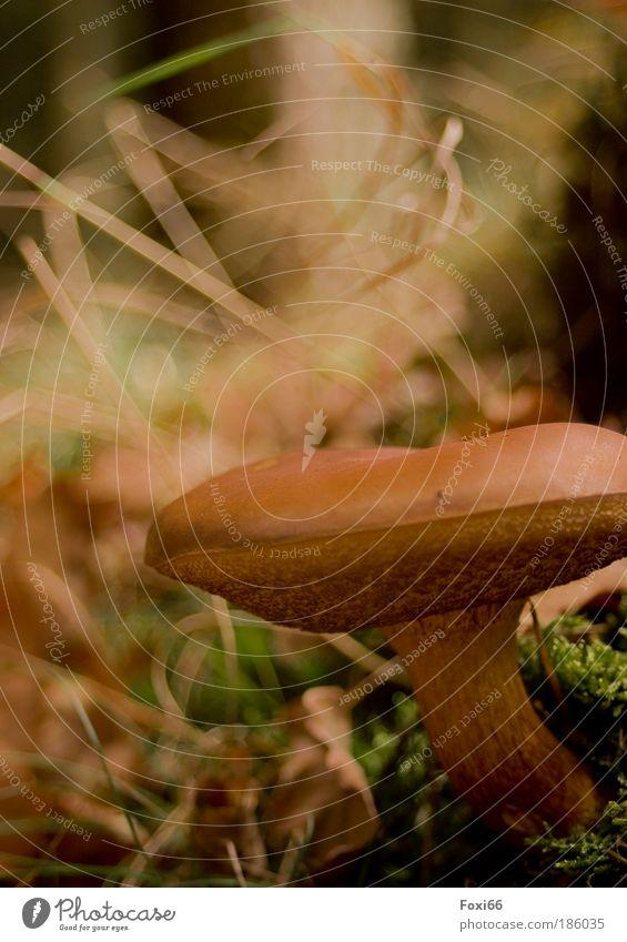 Lecker Natur Umwelt Ernährung Wiese Herbst Bewegung Freiheit Wege & Pfade Glück Klima Freizeit & Hobby natürlich wandern authentisch ästhetisch Lifestyle