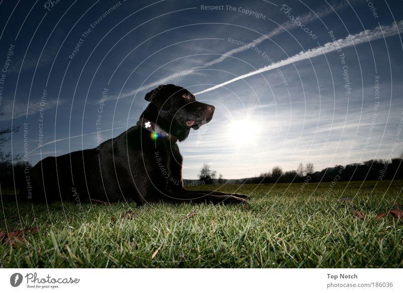 Herr Schmitz Sonne Tier Farbe Hund Zeit Lebensfreude Labrador