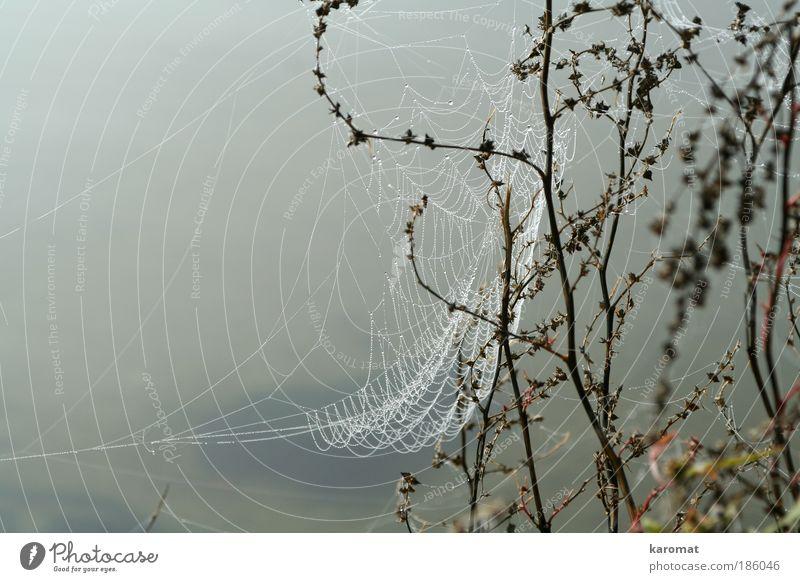 Spinnenweben Natur Wasser Einsamkeit grau Traurigkeit Wassertropfen trist Insel Netz Tau Spinne Rügen Spinnennetz