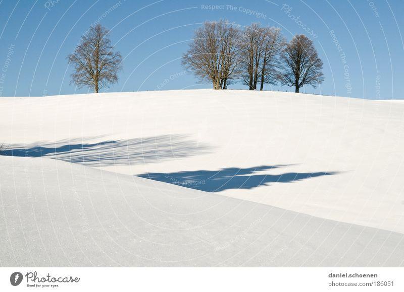 sinkende Schneefallgrenze ! blau weiß Baum Pflanze Winter ruhig Schnee Eis Klima Frost Schönes Wetter Wolkenloser Himmel Schwarzwald