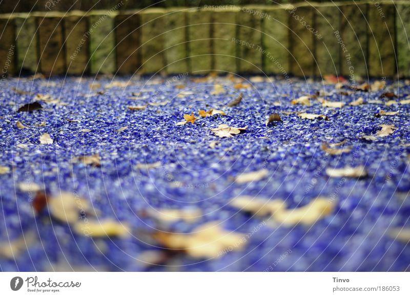 Blättermeer Wasser alt Meer blau Blatt Herbst Wand Bewegung Garten Mauer Park liegen außergewöhnlich Wellen Begrenzung