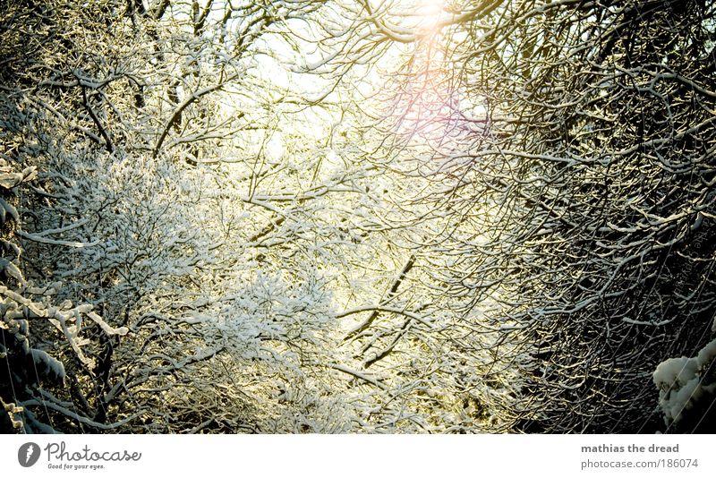 DIE SONNE KOMMT RAUS Umwelt Natur Landschaft Pflanze Himmel Sonnenlicht Winter Schönes Wetter Eis Frost Schnee Baum Sträucher Wald Berge u. Gebirge Gipfel