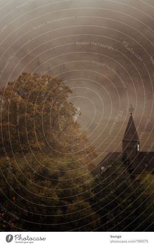 caligo Natur Baum Landschaft dunkel Herbst Religion & Glaube träumen braun Stimmung Nebel Kirche ästhetisch Wassertropfen Sträucher trist Hoffnung