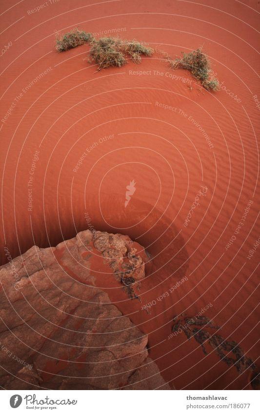 Natur Pflanze rot Ferien & Urlaub & Reisen Sand Landschaft Umwelt Felsen Wüste