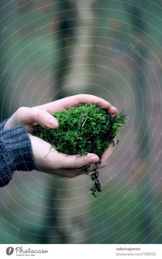in deinen händen Umwelt Natur Erde Herbst Winter Pflanze Baum Moos Grünpflanze Garten Wald Sicherheit Schutz Geborgenheit Verlässlichkeit Gelassenheit Farbfoto