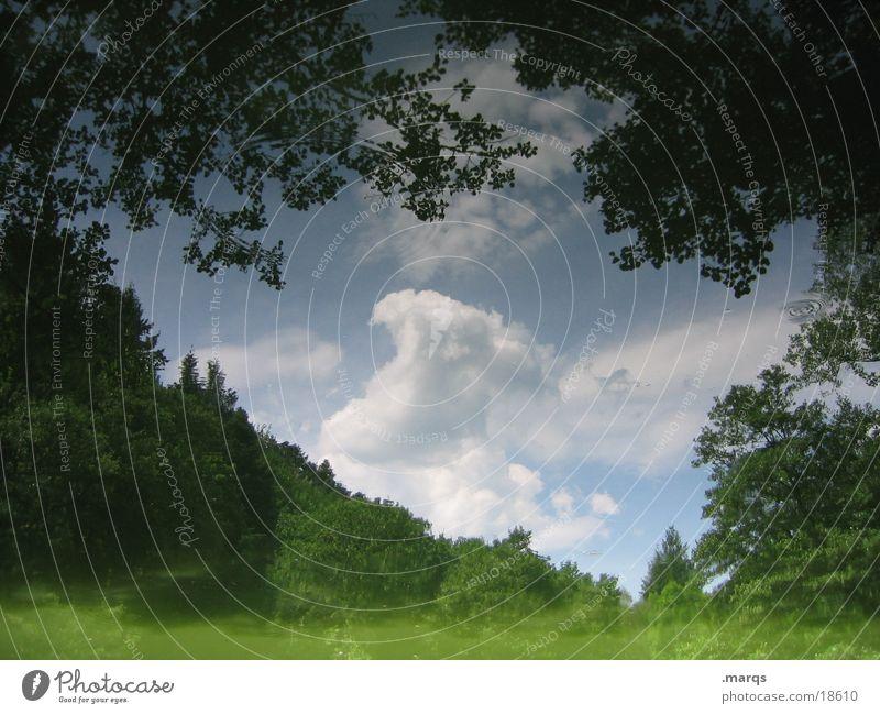Wald im Waldsee trüb See Reflexion & Spiegelung Sommer Wolken Baum Wasser Landschaft