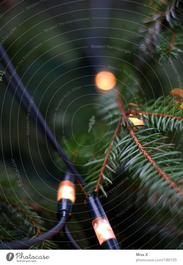 Weihnachtsbeleuchtung Weihnachten & Advent Baum Winter dunkel Stimmung hell Feste & Feiern Beleuchtung Freizeit & Hobby Dekoration & Verzierung Weihnachtsbaum