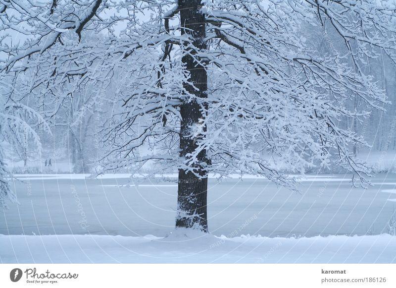 verschneiter Baum Natur Wasser Winter Eis Frost Schnee Park See Menschenleer kalt blau weiß Rügen dünnes Eis Neuschnee Gedeckte Farben Außenaufnahme Tag Abend
