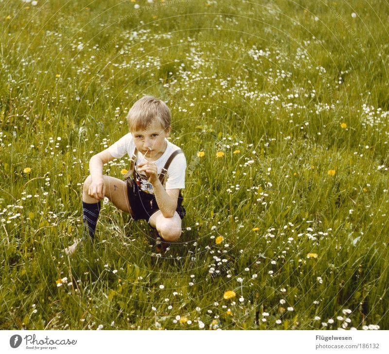 Auf der Wiesn Mensch Ferien & Urlaub & Reisen Pflanze Blume Wiese Spielen Junge Gras Park Kind Freizeit & Hobby sitzen Tourismus beobachten Strümpfe Bildung