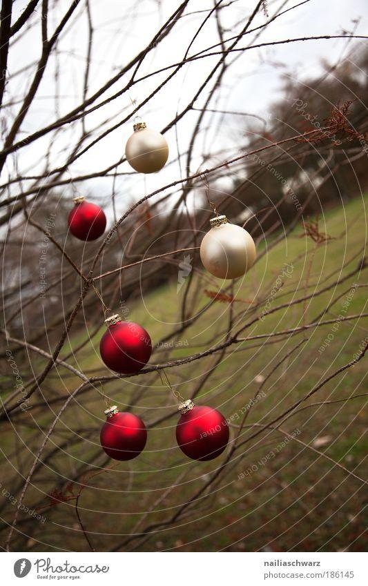 Vorweihnachtsstimmung Natur Weihnachten & Advent Baum grün rot Winter Herbst Gefühle Holz Landschaft braun Feste & Feiern Glas Umwelt gold