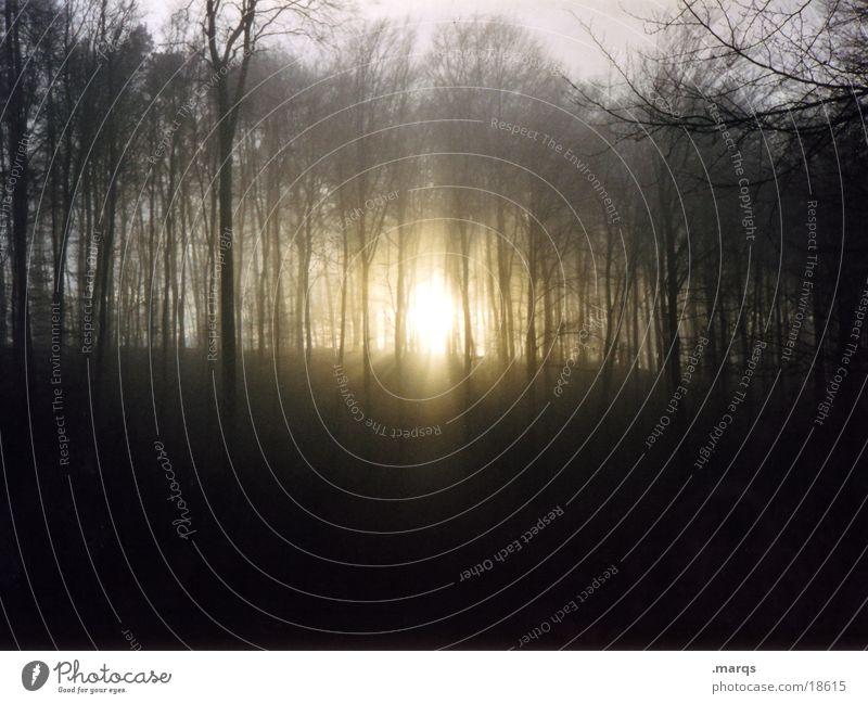Blairwitch*style Sonne ruhig Einsamkeit Wald dunkel Herbst Berge u. Gebirge Angst bedrohlich Panik