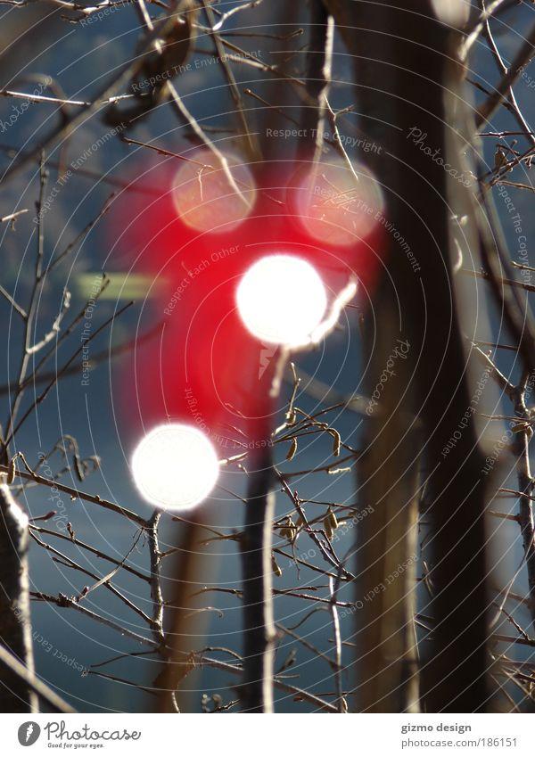 Rot mal anders !!! Natur weiß Baum Pflanze rot Einsamkeit Leben Herbst Gefühle träumen braun glänzend Umwelt Wassertropfen frei rund