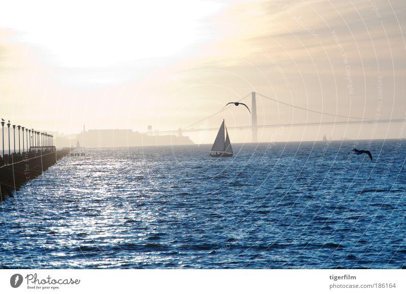 blau Wasser Sonne Ferien & Urlaub & Reisen Meer ruhig Landschaft Freiheit Stimmung Vogel Wellen gold glänzend ästhetisch Brücke Coolness