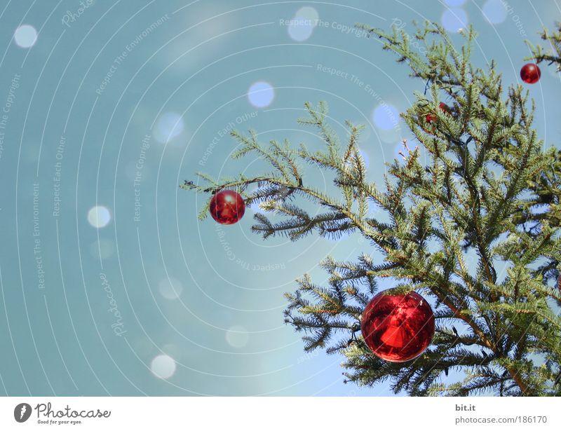 KITSCH ME UP Baum Weihnachten & Advent Himmel Winter Schnee Schneefall Stimmung Feste & Feiern glänzend Design Romantik Weihnachtsbaum Kitsch