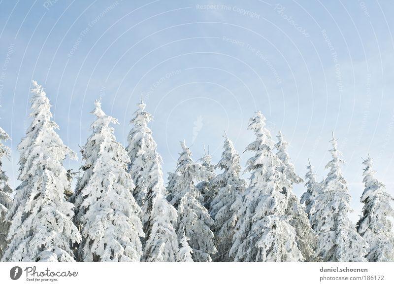 na endlich !! ob ihr wollt oder nicht weiß Baum blau Winter Wald Schnee Eis Frost Natur Tanne Winterurlaub Wolkenloser Himmel Winterstimmung
