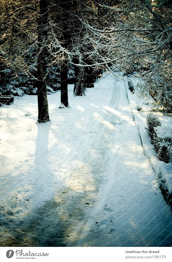 BETRETEN AUF EIGENE GEFAHR Natur weiß Pflanze Winter Straße Wald kalt Schnee Berge u. Gebirge Schatten Wege & Pfade Park Landschaft Eis wandern