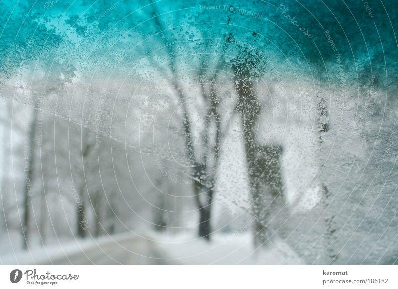 Schneefahrt Landschaft Winter Eis Frost Baum Autofahren Straße PKW Glas frieren hell kalt Idylle Windschutzscheibe Tropfen Wassertopfen Allee Gedeckte Farben