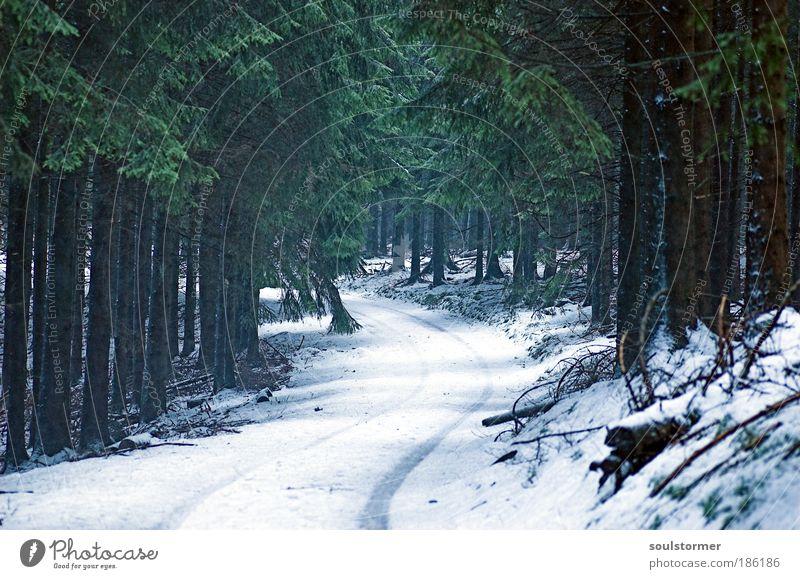 Märchen im Wald Umwelt Natur Landschaft Pflanze Nebel Schnee Baum Angst Märchenwald Märchenlandschaft Wege & Pfade Tanne träumen Surrealismus Farbfoto