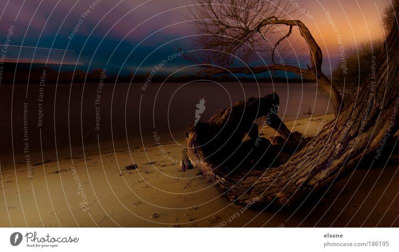 ELBSTRAND Natur Landschaft Wasser Sonnenaufgang Sonnenuntergang Baum Küste Flussufer Strand ELBE Hafenstadt Stadtrand Menschenleer entdecken Erholung wandern