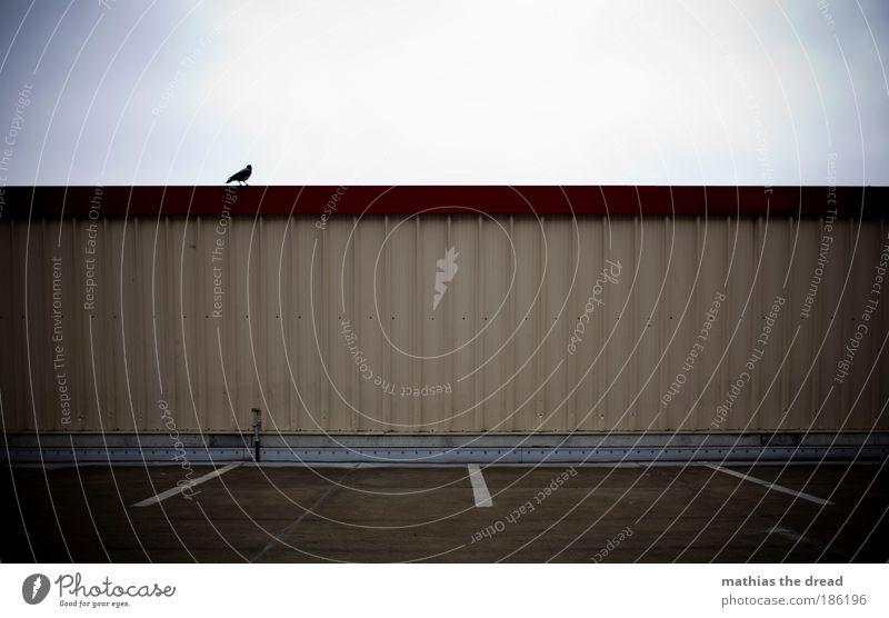RABE AUF LAUER Himmel Einsamkeit Tier dunkel Straße Architektur Traurigkeit Herbst Gebäude Vogel Linie Fassade Verkehr trist sitzen warten