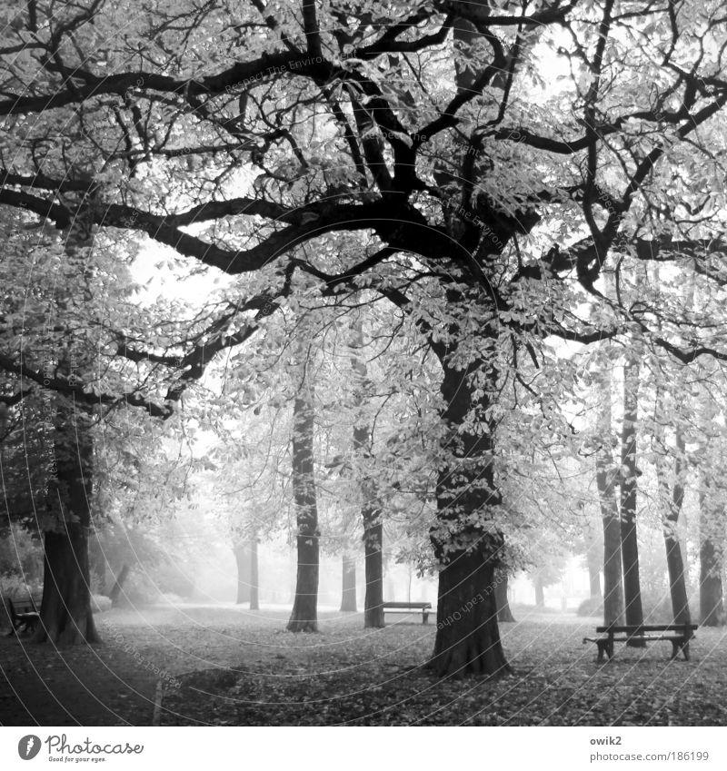 Stadtpark Natur Pflanze Baum ruhig Landschaft Umwelt Gras Wege & Pfade Park Deutschland Wetter Erde Klima Nebel Europa Sträucher