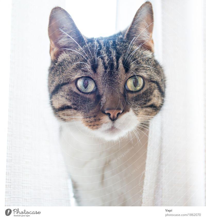 Graue gestreifte und neugierig schauende Katze schön weiß Tier schwarz Gesicht gelb lustig klein grau braun sitzen Aussicht niedlich Haustier Tiergesicht