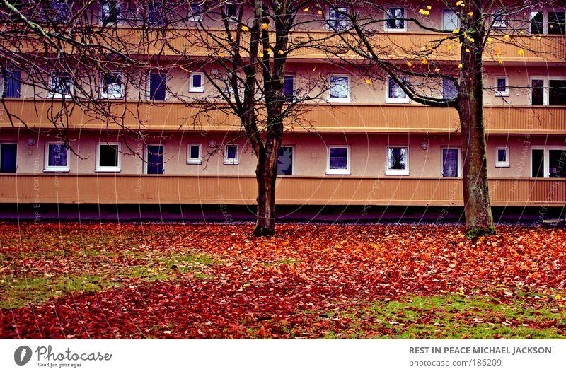 1. Dezember 2008 Natur Baum Stadt Pflanze rot Blatt Haus gelb Wiese Wand Fenster Gras Stein Mauer Landschaft braun