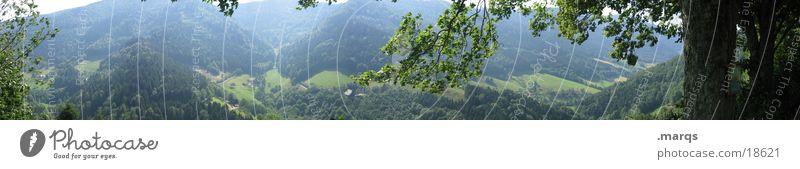 Dreitälerblick Baum Sommer Blatt Ferne Wald Berge u. Gebirge groß Aussicht Baumstamm Panorama (Bildformat) Tal Pflanze Landwirtschaft Schwarzwald Monokultur