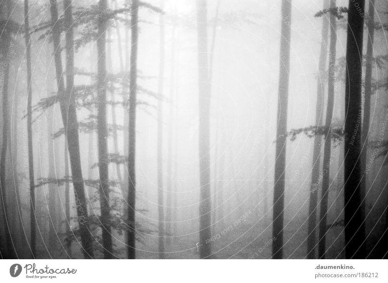 fraktale geometrie Natur alt Baum Einsamkeit Wald Leben dunkel Herbst Gefühle Denken Landschaft Stimmung Angst Nebel Schwarzweißfoto Erde